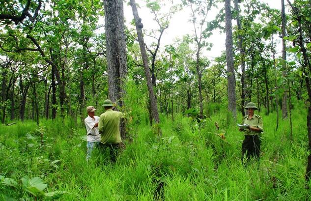 Trong 15 năm qua, diện tích rừng đã không ngừng tăng lên, từ 10,6 triệu ha vào năm 2000 lên 13,9 triệu ha vào năm 2014. Ảnh: Tất Tiên