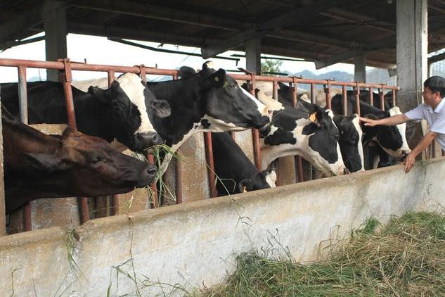 Hạn chế về vốn là rào cản lớn đối với đa số doanh nghiệp chăn nuôi trong nước Ảnh: Tất Tiên