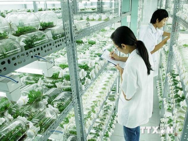 Nghiên cứu phát triển nông nghiệp công nghệ cao. (Ảnh: Mạnh Linh/TTXVN)