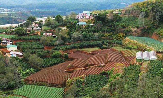 Làn sóng thâu tóm đất nông trại được dự báo sẽ được nhà đầu tư cá nhân và tổ chức nhập cuộc năm 2016.