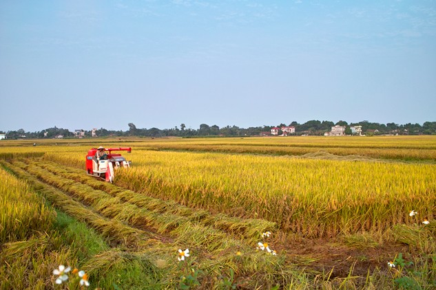 Vấn đề đầu tiên cần giải quyết để thu hút đầu tư vào nông nghiệp là đất đai. Ảnh: LTT