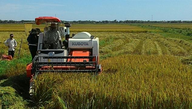 Trong số hơn 10 triệu lao động nông nghiệp thì có tới 97% không được đào tạo nghề. Ảnh: Ngọc Minh