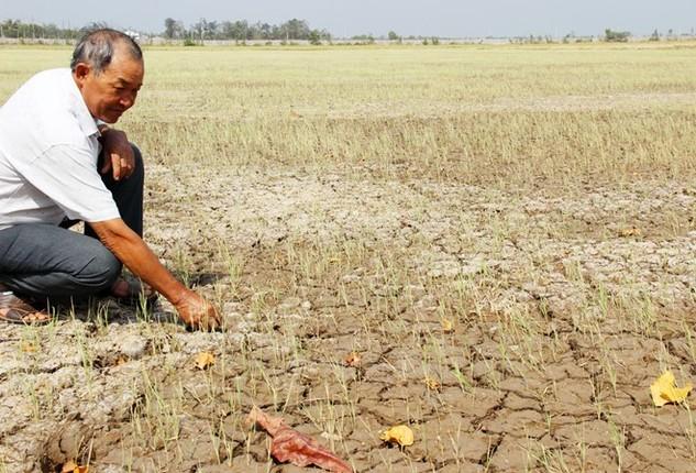 Hạn hán và xâm nhập mặn là một trong các nguyên nhân khiến World Bank hạ dự báo tăng trưởng Việt Nam (Ảnh: Internet)