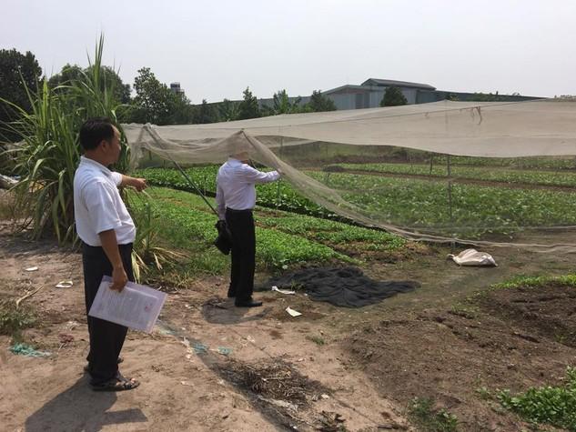 Việc Chi cục Thi hành án dân sự huyện Củ Chi (TP.HCM) đấu giá thửa đất có diện tích 3.083,7m2 bị tố cáo có nhiều khuất tất, không minh bạch. Ảnh: Ngô Ngãi