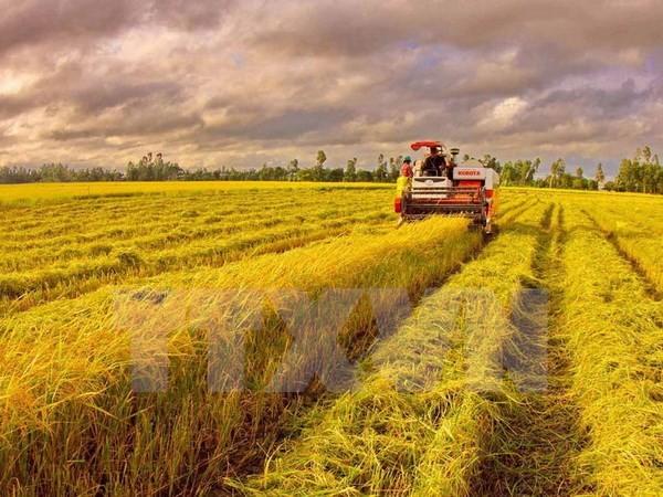 Thu hoạch lúa ở xã Thanh Thủy, huyện Vị Thủy, tỉnh Hậu Giang. (Ảnh: Duy Khương/TTXVN)