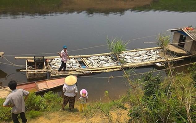 Hàng chục tấn cá đã bị chết trên sông Bưởi (Thanh Hóa) do Công ty CP mía đường Hòa Bình gây ô nhiễm dòng sông. Ảnh: Anh Quân st
