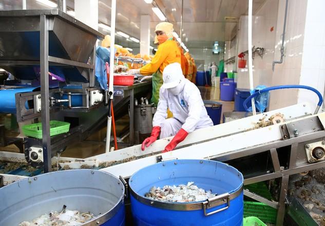 Các doanh nghiệp thủy sản đang buộc phải thu hẹp sản xuất. Ảnh: Lê Tiên