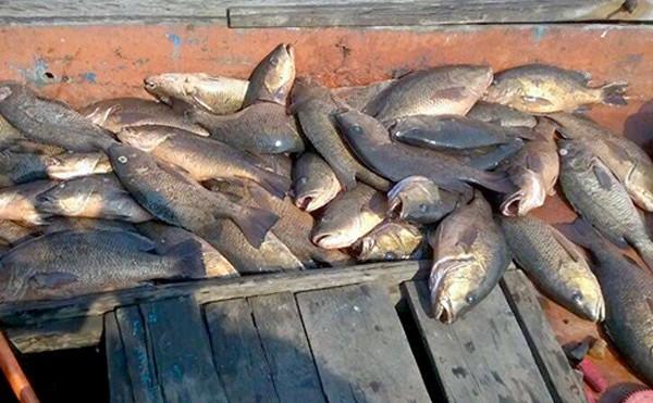 Hiện tượng cá chết hàng loạt diễn ra tại 4 tỉnh miền Trung từ tháng 4. Ảnh:Đức Hùng.