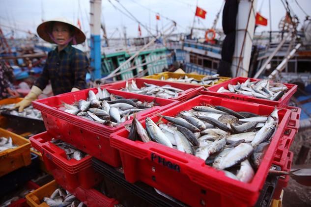 Sản lượng thu mua thủy sản 8 tháng đầu năm giảm tới 60% so với cùng kỳ năm ngoái