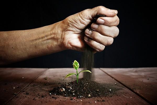 Doanh nghiệp khởi nghiệp cũng như một mầm cây, cần môi trường tốt để lớn lên