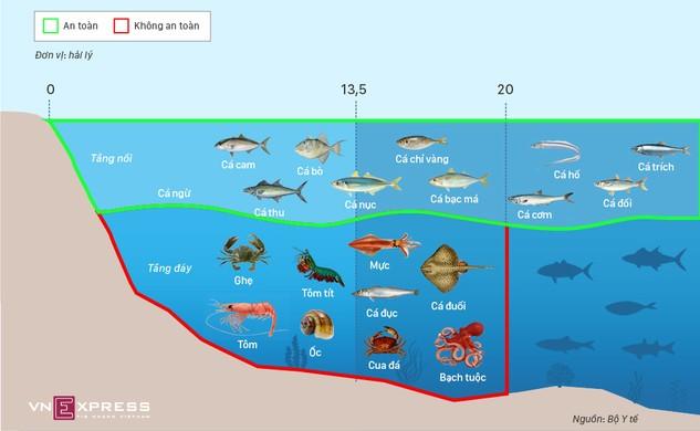 Loại cá biển nào an toàn
