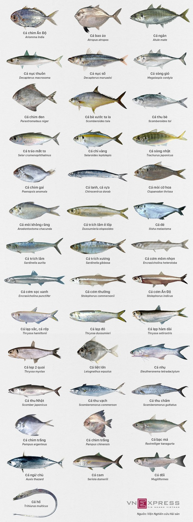 Các loại cá biển miền Trung khuyến cáo an toàn để ăn