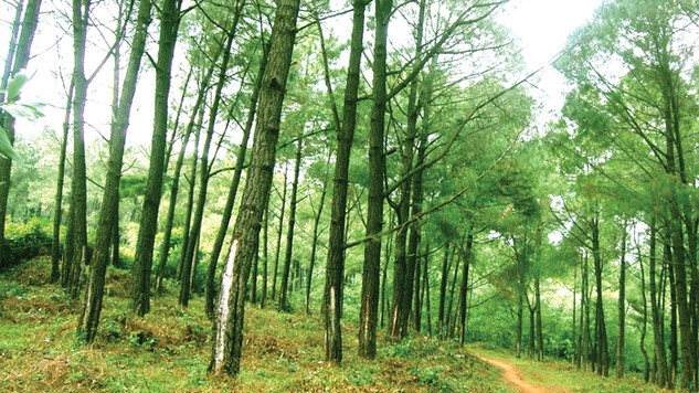 Dự án Hành lang bảo tồn đa dạng sinh học tiểu vùng Mê Công mở rộng - Giai đoạn 2 gồm có 16 gói thầu. Ảnh: MT