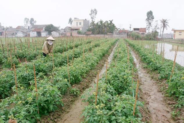 Các biện pháp hỗ trợ tổ chức tín dụng cho vay phát triển nông nghiệp, nông thôn đã được Ngân hàng Nhà nước đề xuất trong Dự thảo Thông tư mới. Ảnh: Huyền Trang