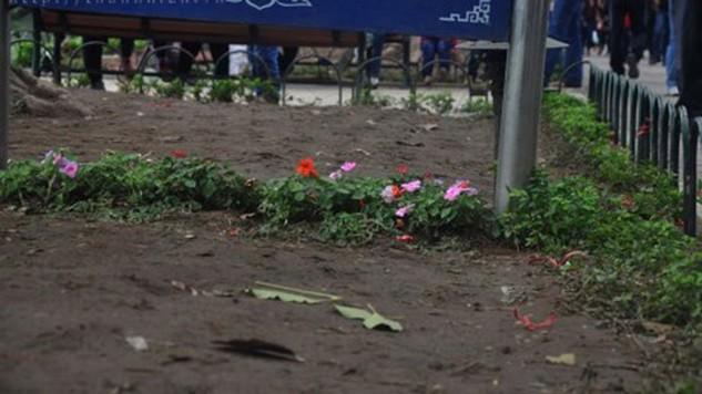 Cả vườn hoa bị san phẳng, luống hoa còn sót lại nhờ nằm khuất dưới một tấm biển - Ảnh: Thúy Hằng