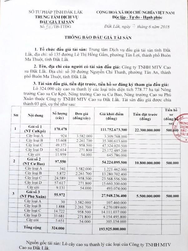 Đấu giá cây cao su thanh lý tại Đắk Lắk - ảnh 1