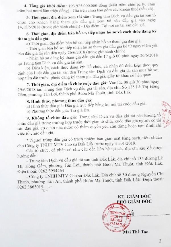 Đấu giá cây cao su thanh lý tại Đắk Lắk - ảnh 2