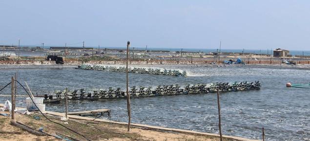 Phú Yên: Thu hồi 50 ha của dự án nuôi tôm công nghiệp vì không hiệu quả - ảnh 1