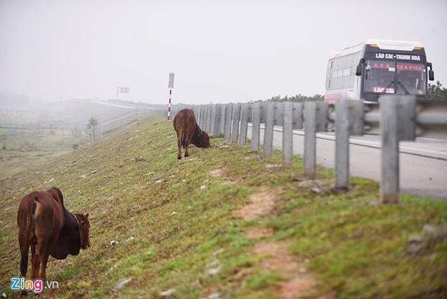 Nguy cơ tai nạn 'rình rập' trên cao tốc Nội Bài - Lào Cai - ảnh 5