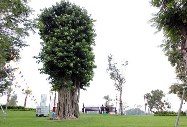 Khánh thành công viên ven sông lớn nhất Sài Gòn - ảnh 4
