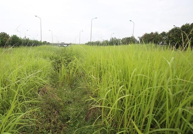 Cận cảnh đại lộ có chi phí cắt cỏ khiến 'nhiều người giật mình' - ảnh 6