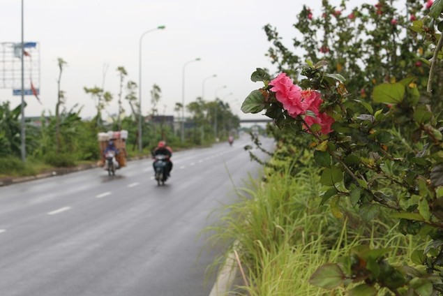 Cận cảnh đại lộ có chi phí cắt cỏ khiến 'nhiều người giật mình' - ảnh 9
