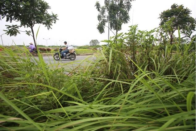 Cận cảnh đại lộ có chi phí cắt cỏ khiến 'nhiều người giật mình' - ảnh 10
