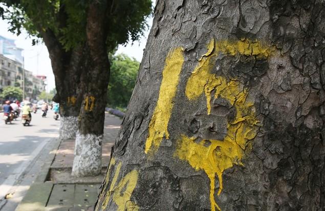 Hà Nội 'chia tay' hàng cây xanh bên hồ Thủ Lệ - ảnh 3