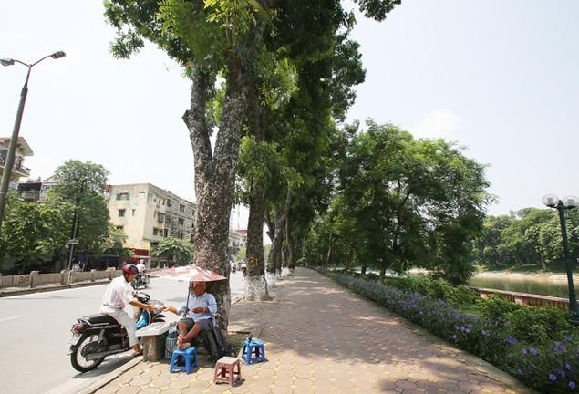 Hà Nội 'chia tay' hàng cây xanh bên hồ Thủ Lệ - ảnh 4
