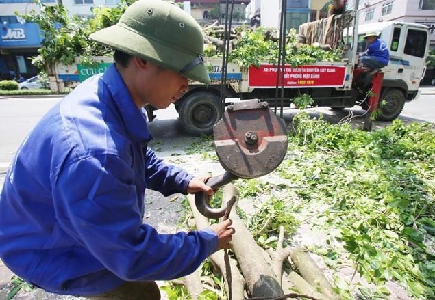 Hà Nội 'chia tay' hàng cây xanh bên hồ Thủ Lệ - ảnh 9
