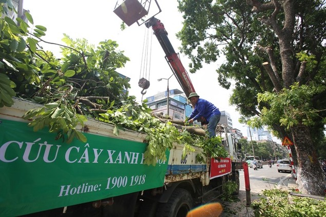 Hà Nội 'chia tay' hàng cây xanh bên hồ Thủ Lệ - ảnh 10