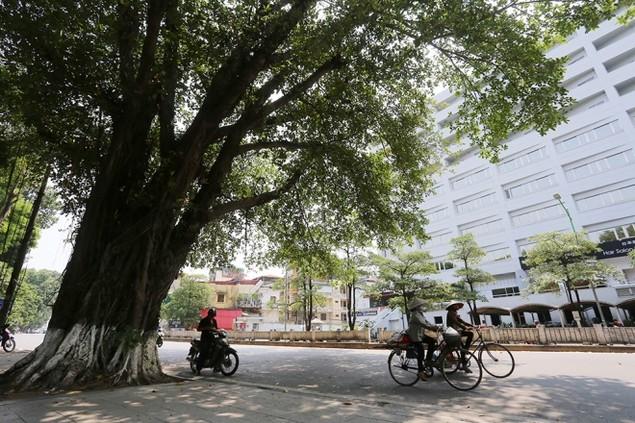 Hà Nội 'chia tay' hàng cây xanh bên hồ Thủ Lệ - ảnh 11