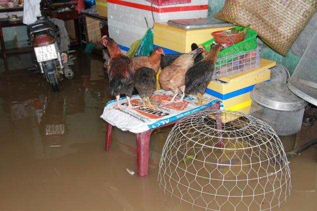 18 giờ sau trận mưa lịch sử, Sài Gòn vẫn chìm trong nước - ảnh 4