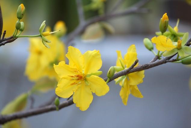 Hương sắc mùa xuân - ảnh 6
